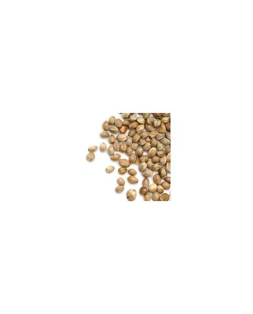 Bulk Seeds Private Grower
