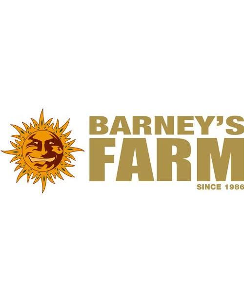 BARNEY'S FARM - AMNESIA LEMON - 3 SEEDS