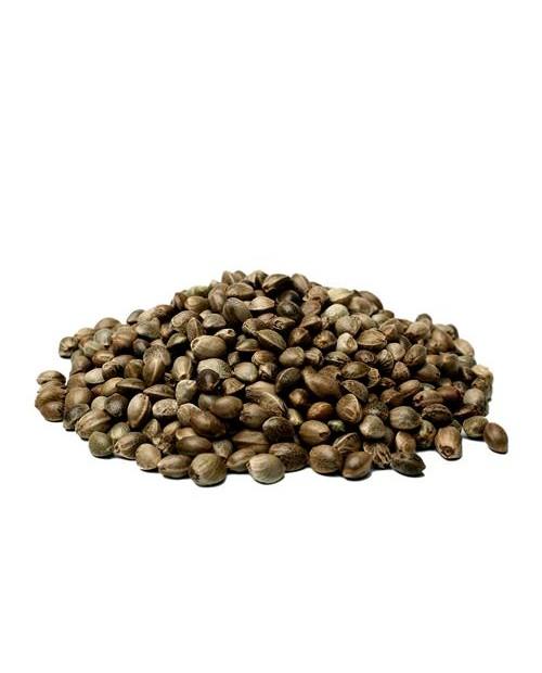 CANAPA SATIVA - DIESEL CBD - 0.5% THC CBD 10-18% CBD - 1 SEME