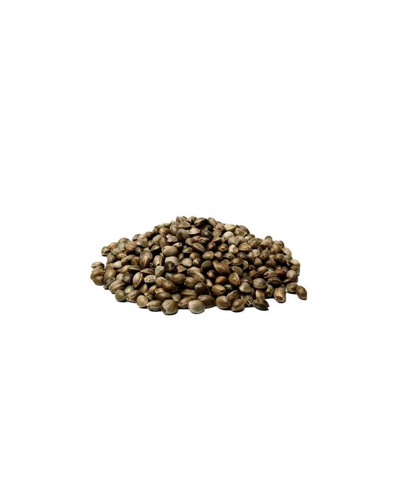CANAPA SATIVA SOLODIAOL ,0.5% THC - 1 SEME