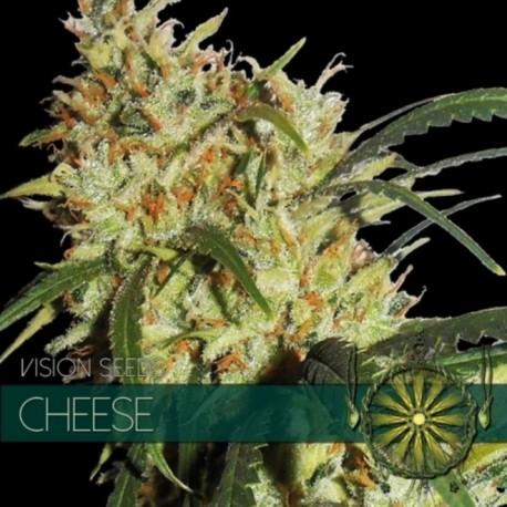 Cheese - Femminizzati- 3 semi