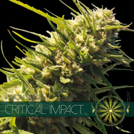 Critical impact 1 seme sfuso