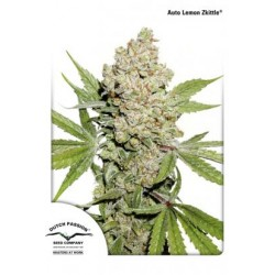 DUTCH PASSION AUTO LEMON ZKITTLE 1 SEME