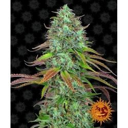 BARNEY'S FARM LSD AUTO 3 SEMI