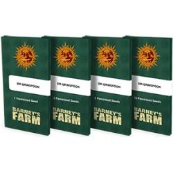 BARNEY'S FARM - DR. GRINSPOON FEMMINIZZATA - 3 SEMI