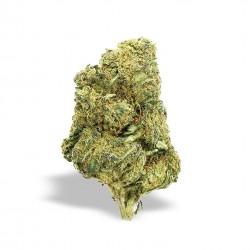 INFIORESCENZA CANAPA L. - AMNESIA - THC 0,45 % - 100 gr.