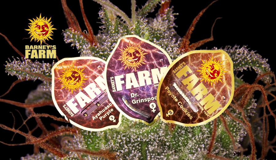 SEMI DI BARNEY'S FARM